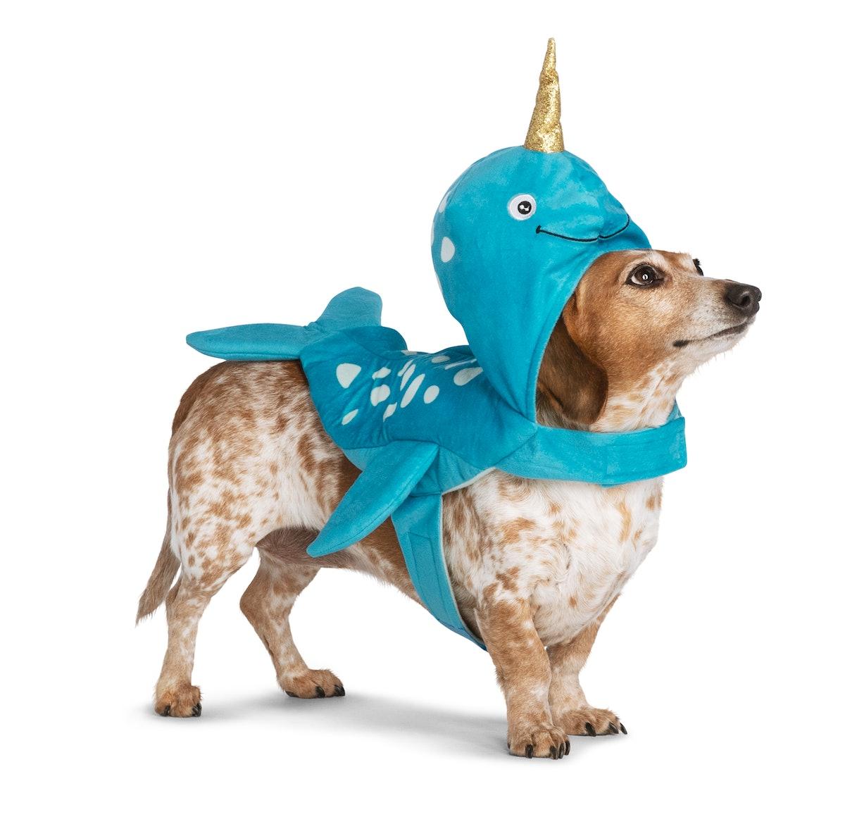 Thrills & Chills™ Pet Halloween Narwhal Pet Costume