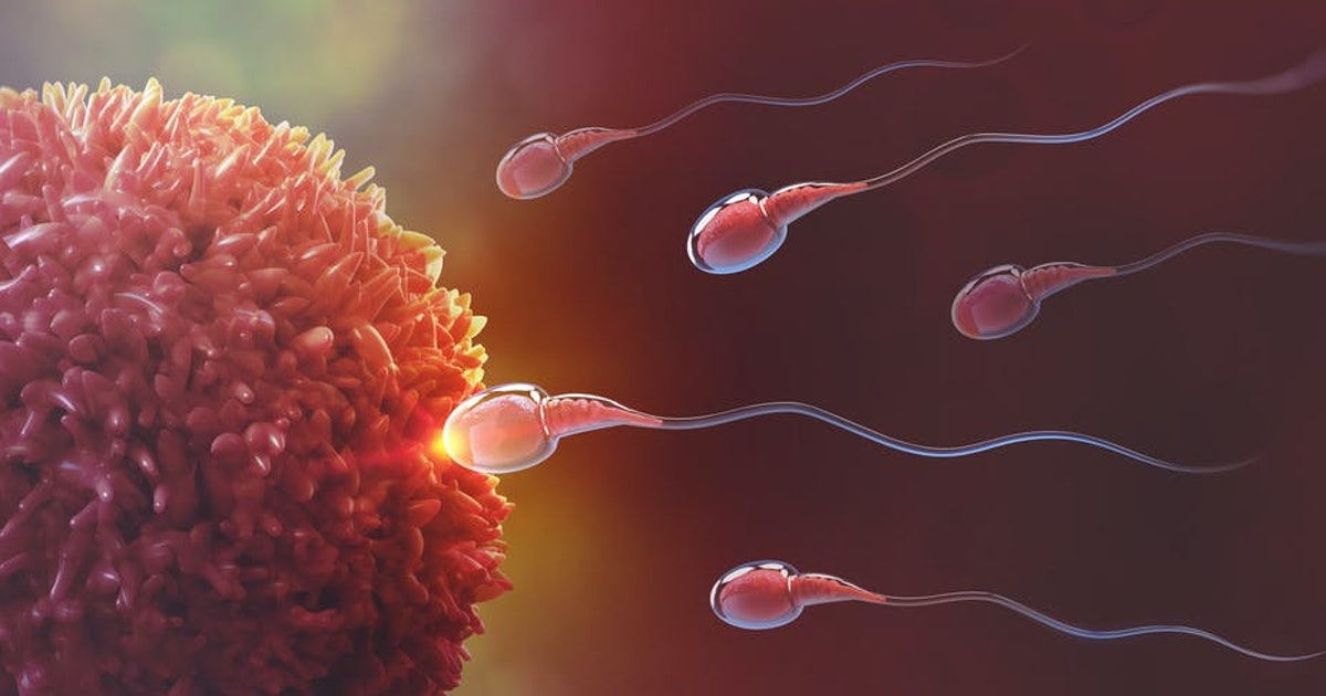 Sperm fooled scientists for 350 years with one unexpected discovery