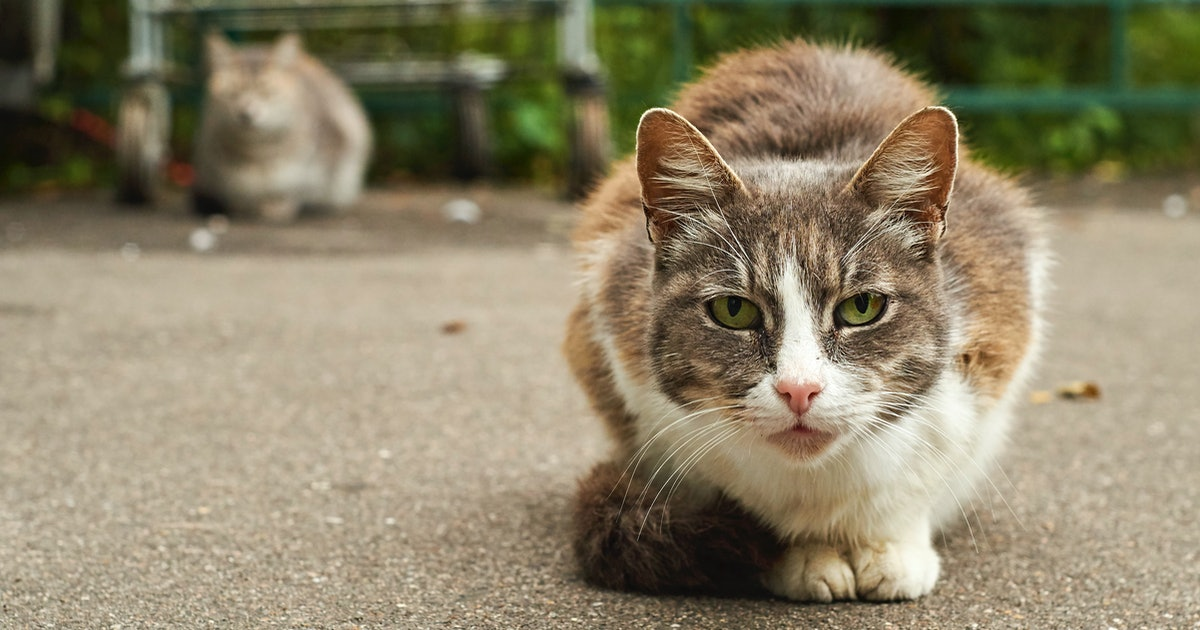 Don't blame cats for destroying wildlife