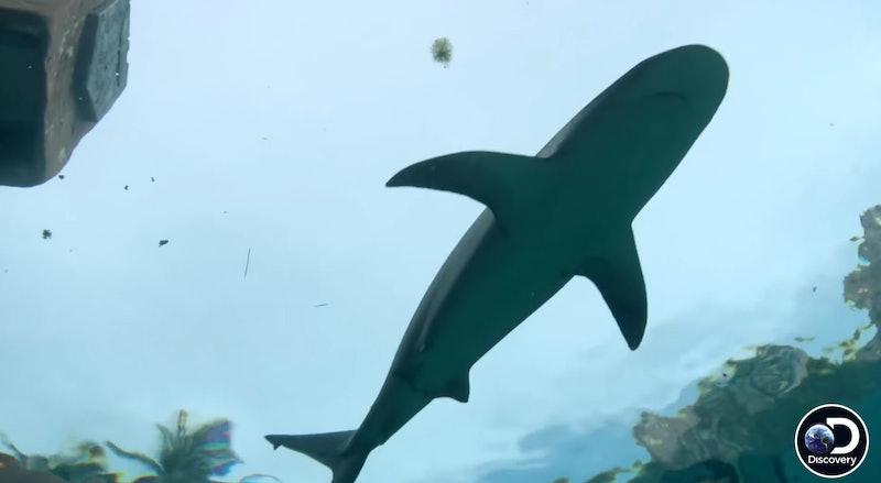 Shark Week 2020 Shaquille O'Neal