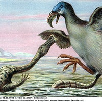 7 extinct birds that were extremely metal