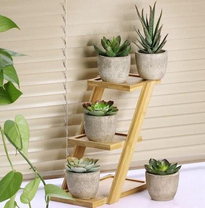 Winlyn Faux Succulent Plants (5-Pack)