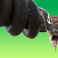 Can a snake crawl in your mouth as you sleep? Experts examine viral video