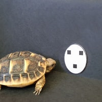 A unique trait shared by tortoises and humans changes a scientific belief