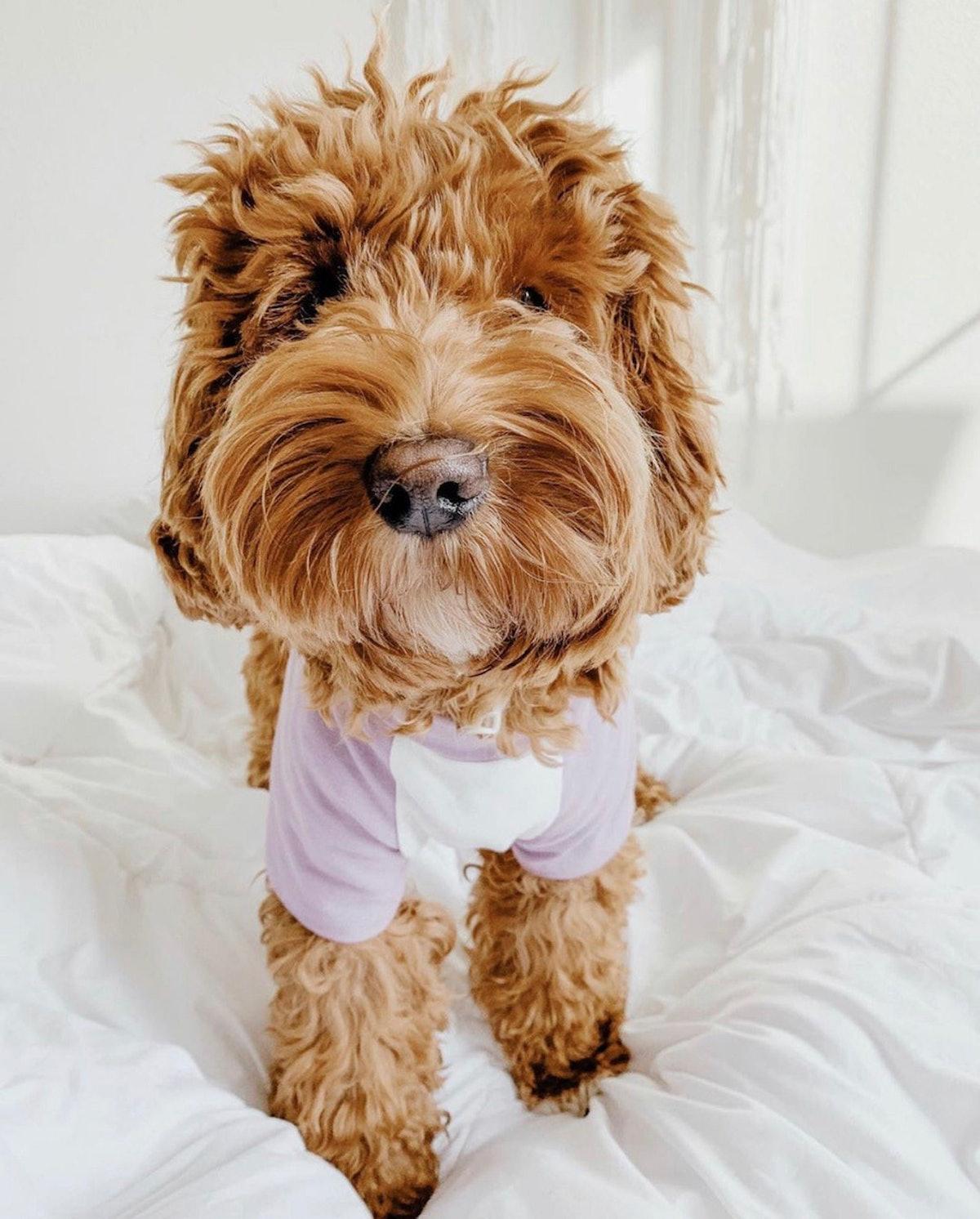 BLANK Dog Shirt, Choose a Color Style Tee