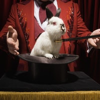What performing magic for animals teaches us about the brain