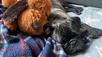 Snuggle Puppy Photo 2