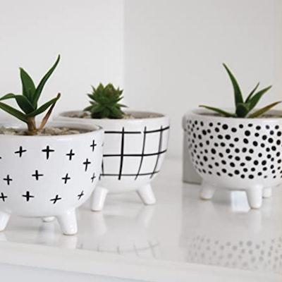 Carlton Lane Sofia Pots For Succulent Plants (Set of 3)