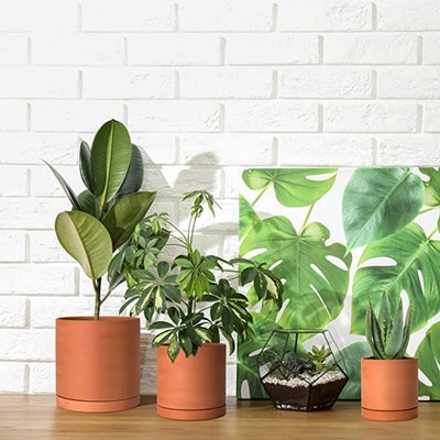 D'vine Dev Terracotta Planter Pots (Set of 3)