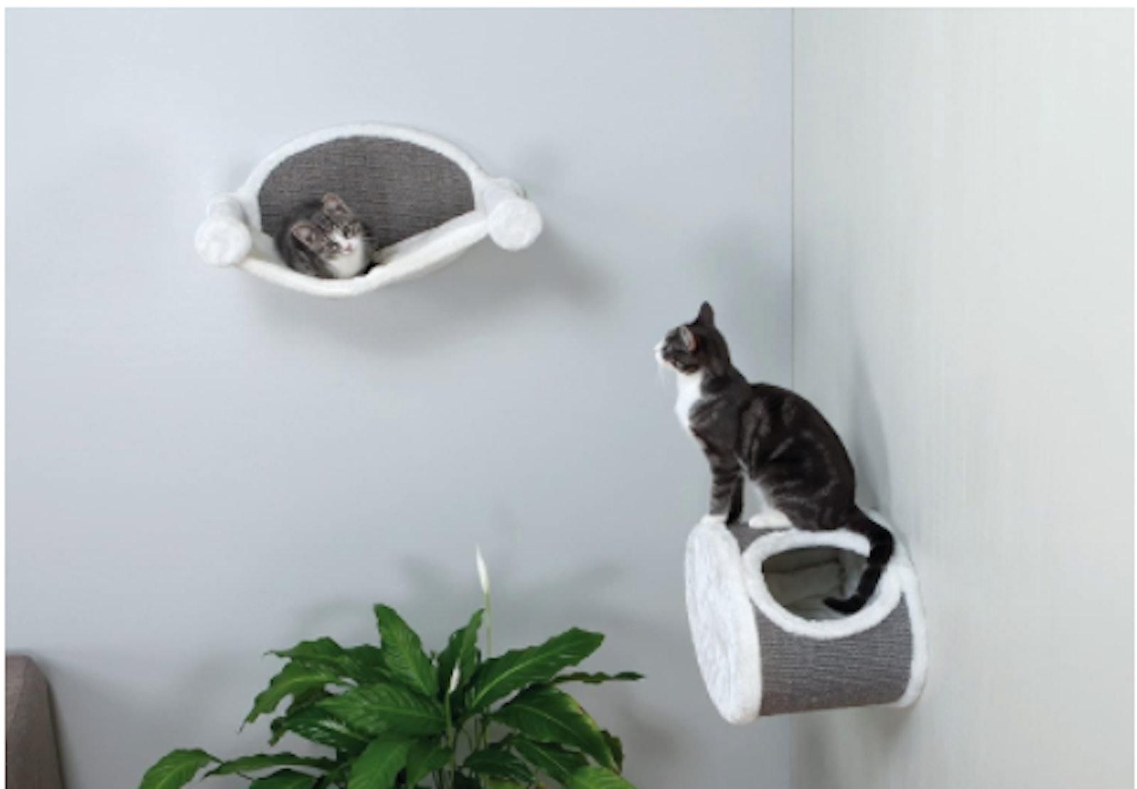 Best Shelves For Cats