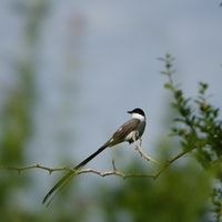 LISTEN: Hear birds communicate without using their beaks
