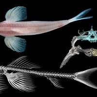 Study reveals 11 bizarre fish that can walk on land