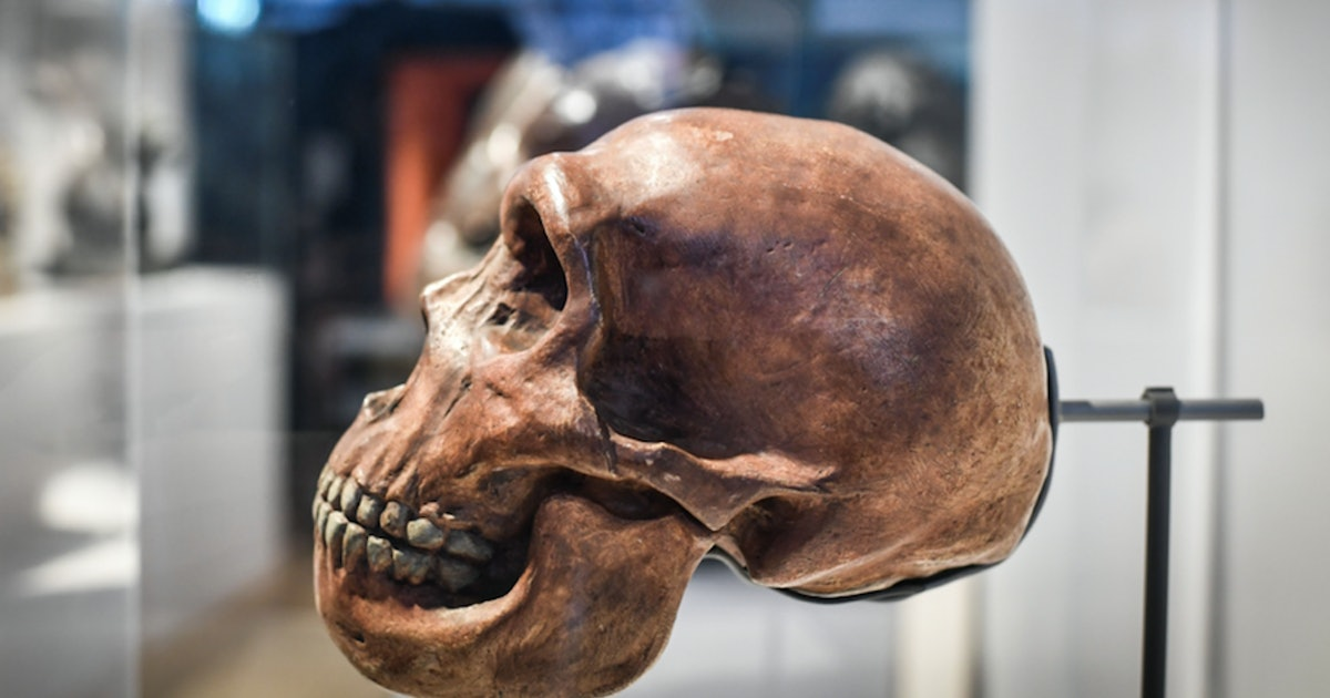 Neanderthal genetics study reveals missing link in human history - Inverse