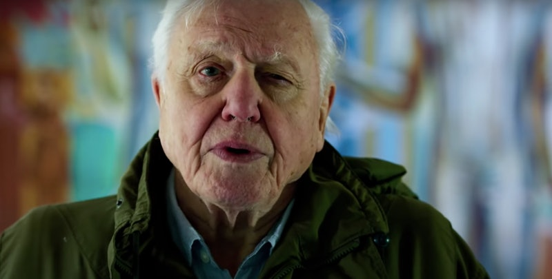 'David Attenborough: A Life On Our Planet' on Netflix