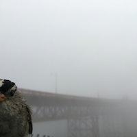 Study reveals coronavirus pandemic's surprising effect on how birds sing