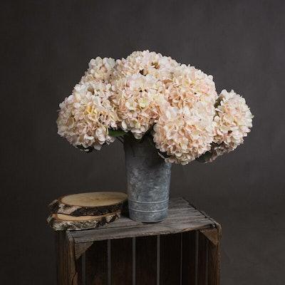Autumn White Hydrangea Flower