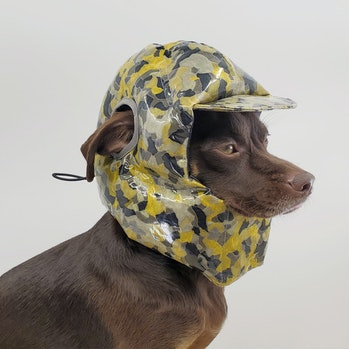 Remy the dog wearing a camoflauge, slick helmet