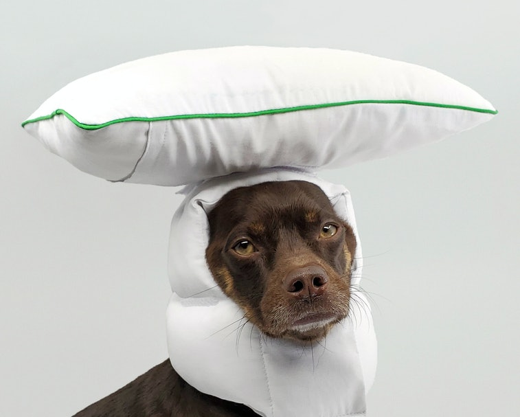Remy the dog wearing a white helmet with a velcroed pillow attached to the top