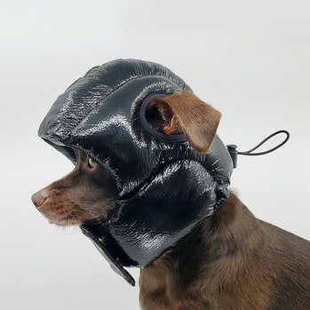 Remy the dog wearing a black helmet, similar to shiny puffer coat