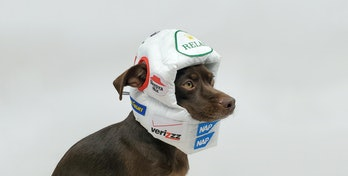 Remy the dog wearing fluffy race helmet with parody sponsors