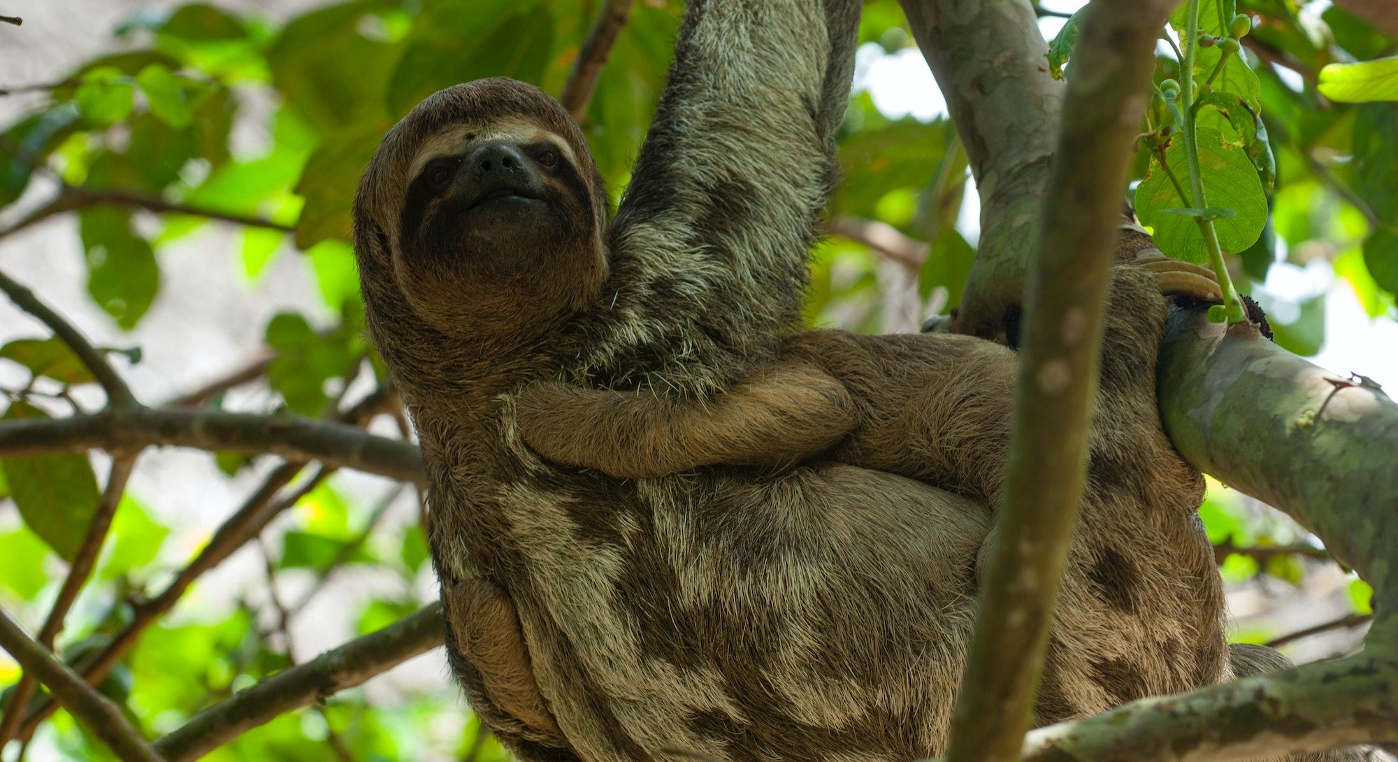sloth how to break bad habits