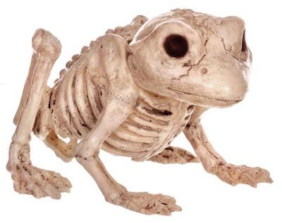 Frog Skeleton Decoration