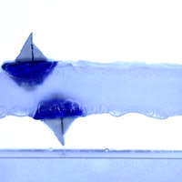 """Physicists discover """"anti-gravity"""" in bizarre buoyancy experiment"""