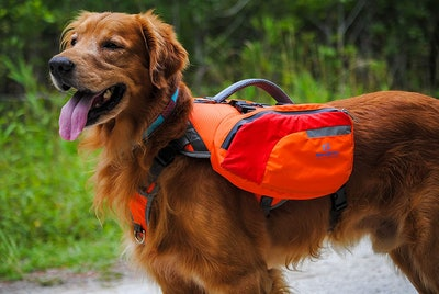 Bark Brite Multi-Purpose Dog Backpack Life Jacket