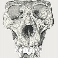 Covid-19 genetics may be linked to an ancient human species