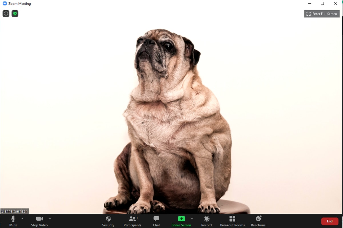 These 18 dog Zoom backgrounds are some barking good.