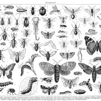 A rapidly declining insect population spells trouble for humans