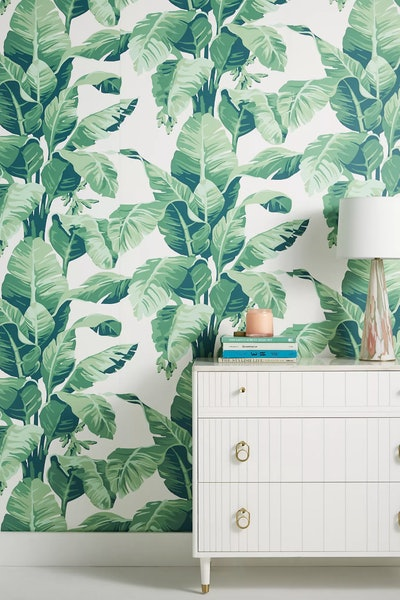 Pacifico Palm Wallpaper