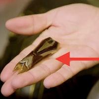 'Star Trek Discovery' Season 4: Secret easter egg totally changes series canon
