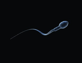 Microscopic image of a single sperm