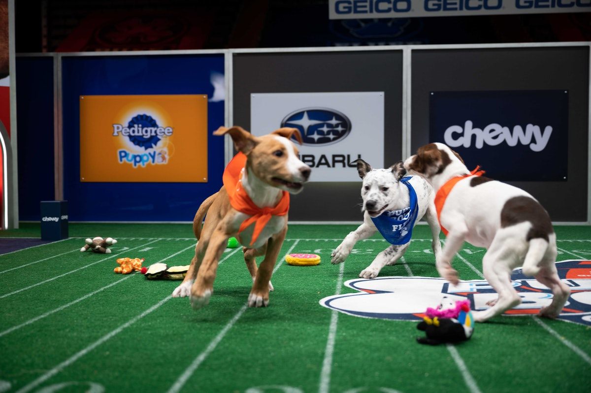 The Puppy Bowl is back for 2021, and there are new puppy cheerleaders hitting the field this year.