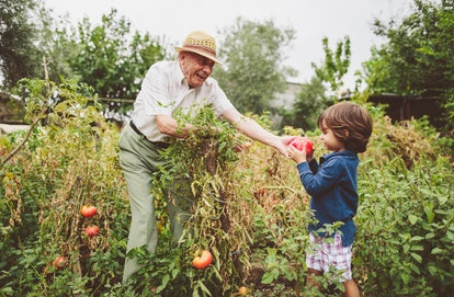 grandson and grandfather picking vegetables