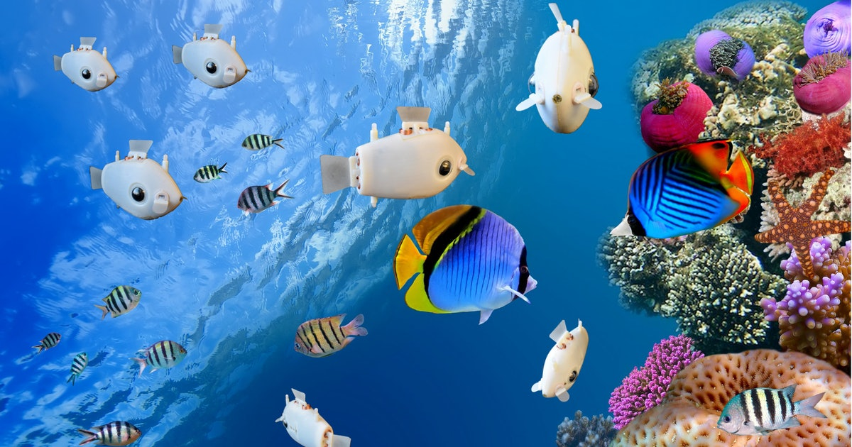 Robot fish illustrate 'collective intelligence' at work in nature - Inverse