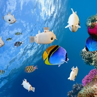 Robot fish illustrate 'collective intelligence' at work in nature