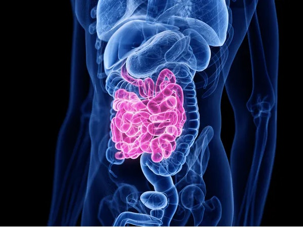 Nutrients get absorbed into your bloodstream — or not — as digestion occurs in your small intestine.
