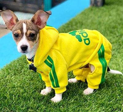 Scheppend Adidog Dog Sweatshirt Outfit