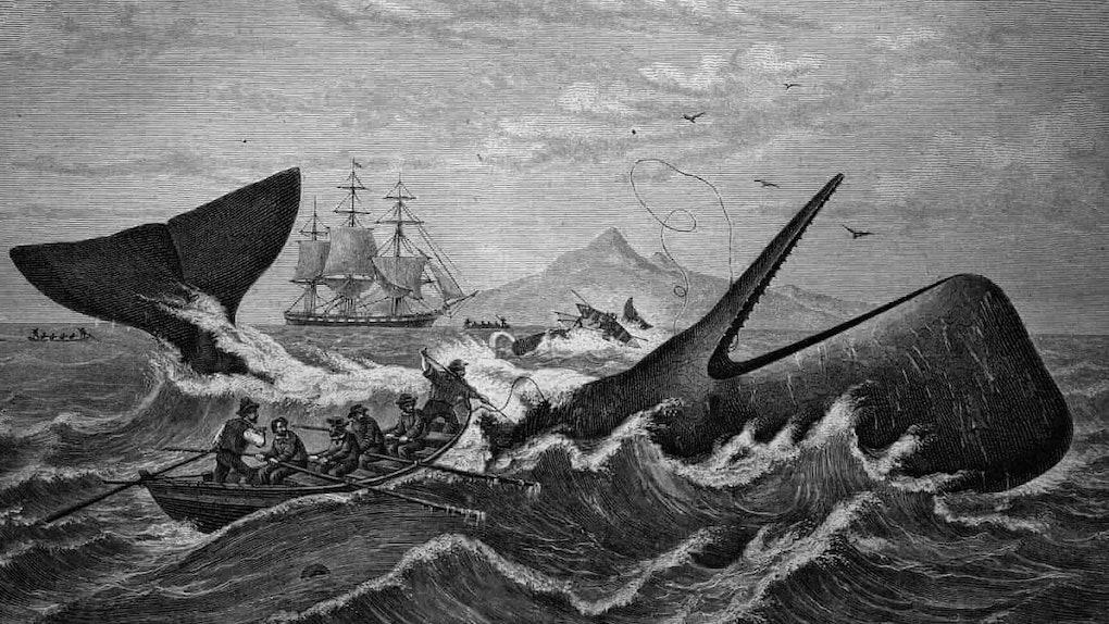 Sailors row out toward a whale.