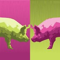 Video: 'Very fat pigs' study sheds light on sleep apnea