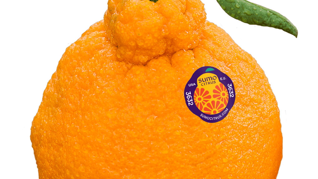 Here's where to buy the Sumo Citrus orange that's taking over social media.
