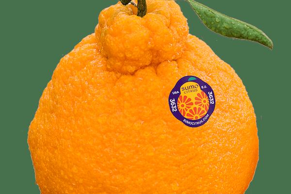 Here's where to buy the Sumo Citrus orange that's taking over social media.