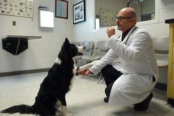 Canine behavioral medicine
