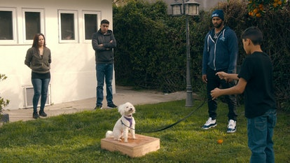 The new Netflix original series, 'Canine Intervention,' focuses on training dogs.