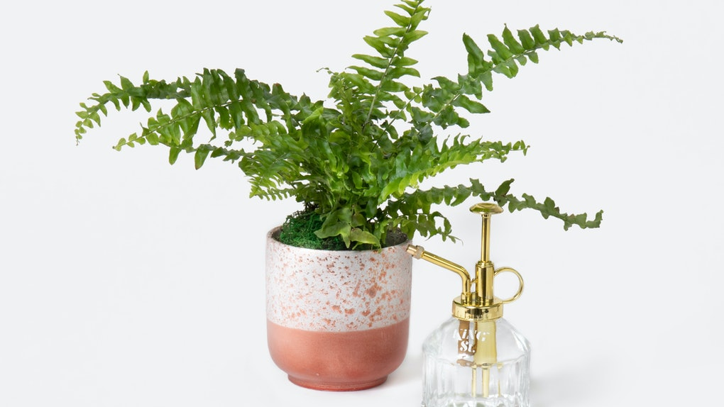 UrbanStems' Valentine's Day 2021 flowers and plants include a Love Fern and so many succulents.