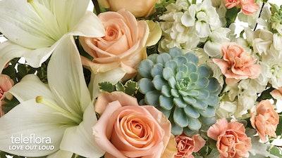 Rose & Succulent Background