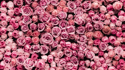 Roses Virtual Background