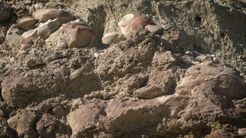 stromatolites found in a dry lakebed during a NASA exercise in Nevada